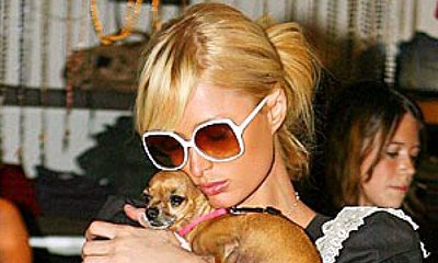 Paris Hilton Saddened and Devastated by Death of Dog Tinkerbell