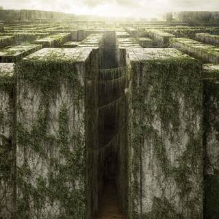 Poster of 20th Century Fox's The Maze Runner (2014)